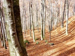 Trekking Valgrande - Pian di Boit